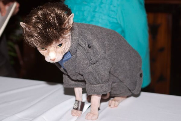Edward Cullen Costume Cat